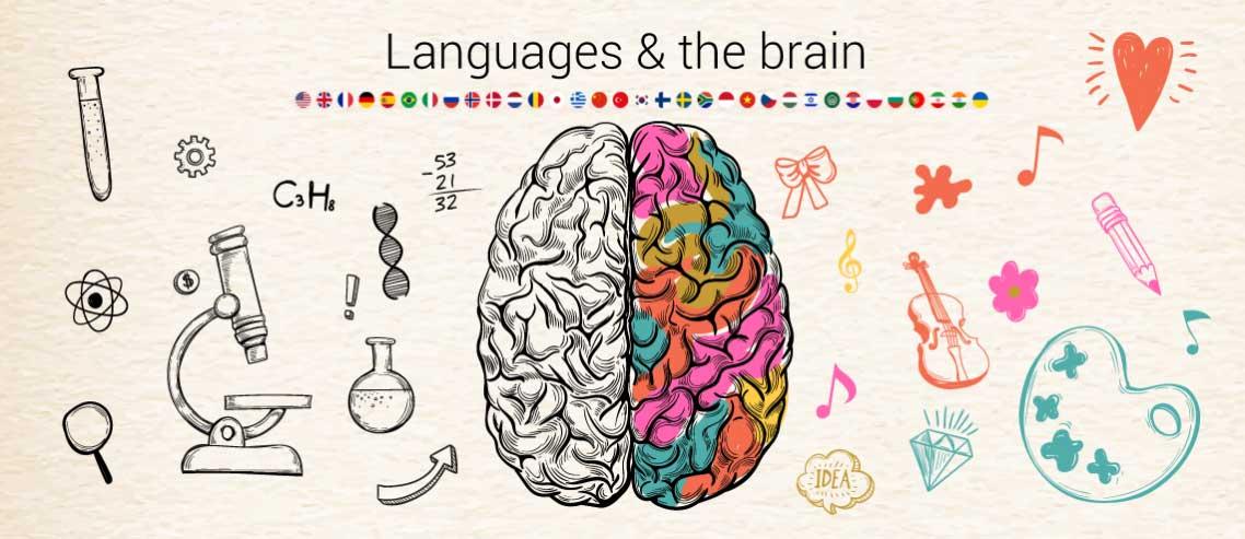 Beynimiz Yeni Bir Dili Hızlı Nasıl Öğrenir?